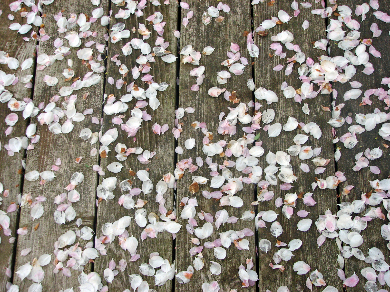 050709-deck-petals-sm-01