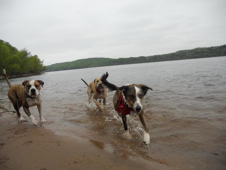dogs-in-water-minnesota.jpg