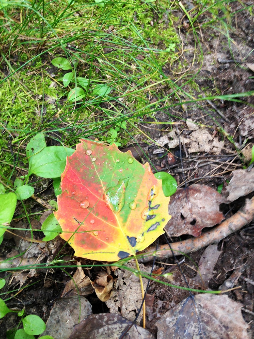 mn-fall-colors-leaf.jpg
