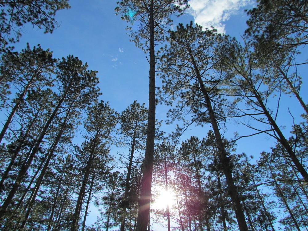 sun+through+the+trees.jpg