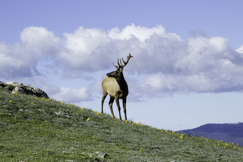 elk-mountains-colorado-rekinspire.jpg