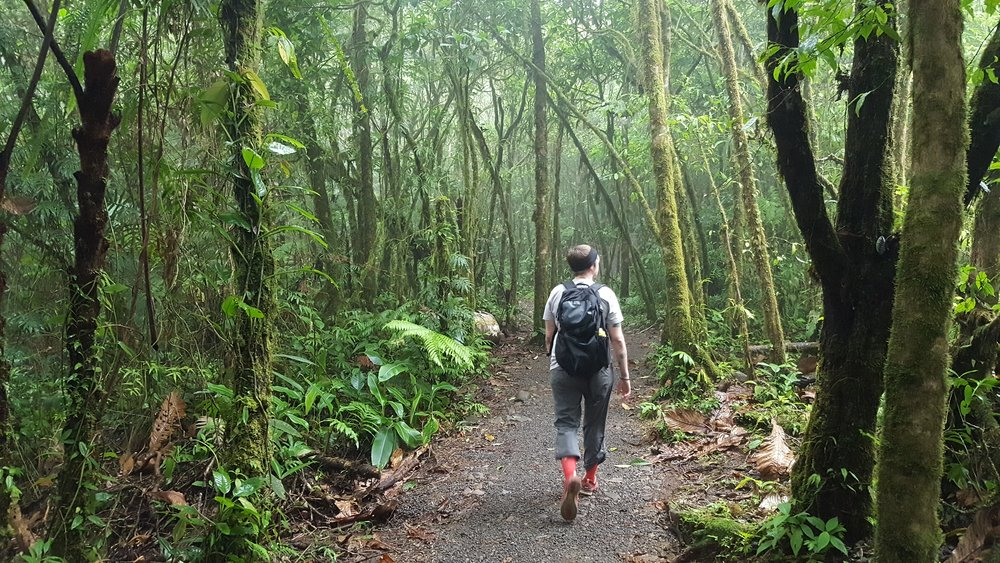 6 - rainforest costa rica hike.jpg