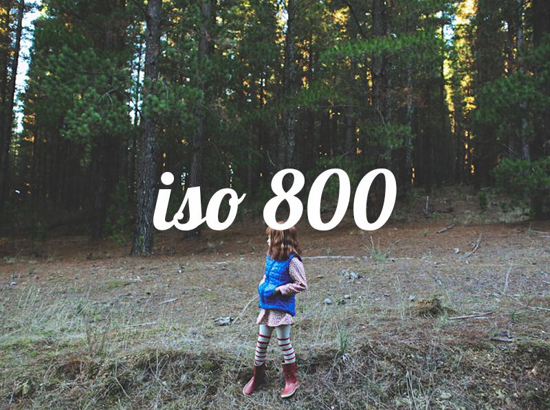 800b.jpg