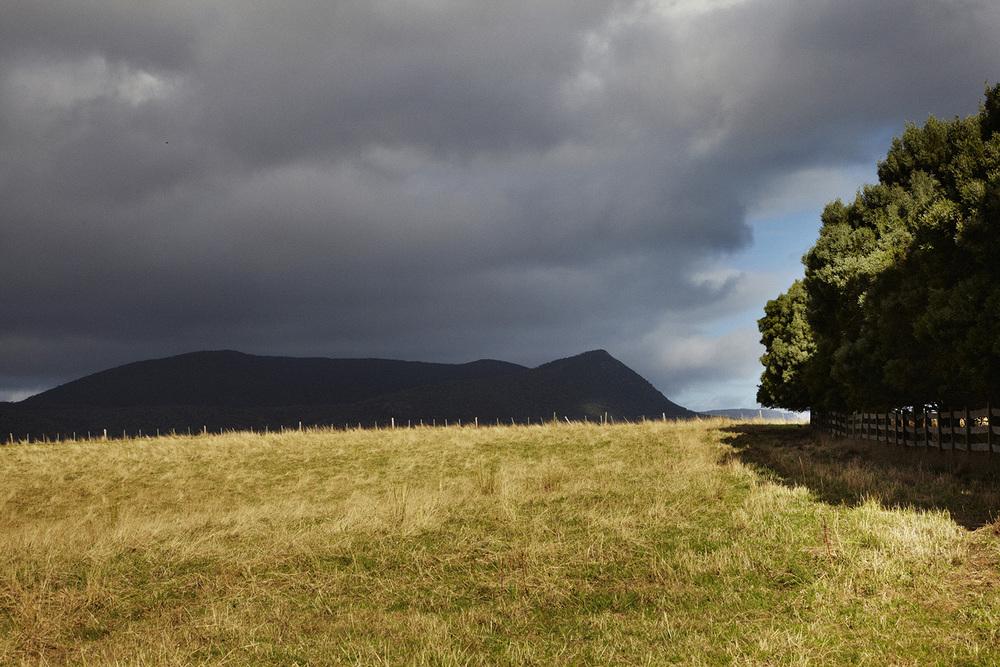South Tasmanian Field IMG_7053 F.jpg