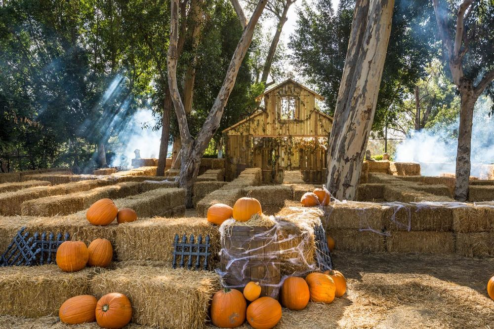 One of the amazing mazes at the LA Zoo - just in time for Halloween! Photo Credit: Jamie Pham