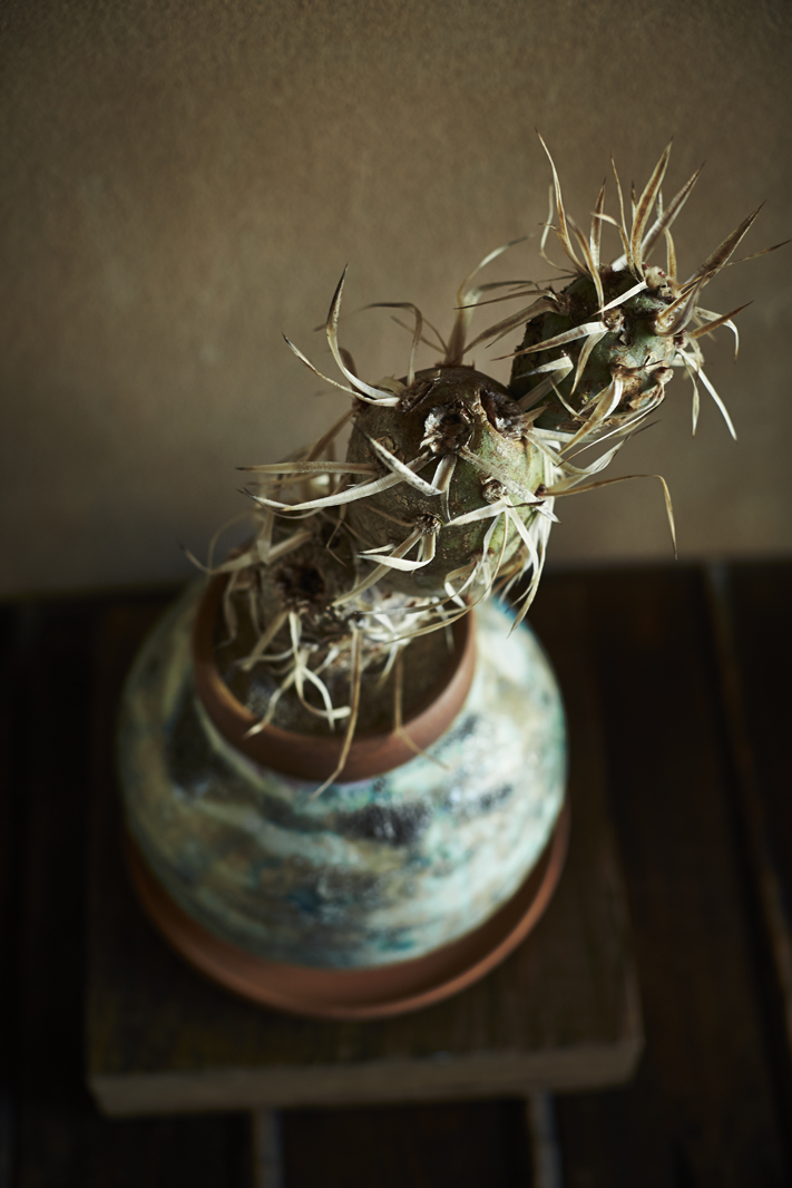 Photo: Shuji Yoshida A Tale of Plant & Pot Kyoto at kamisoe