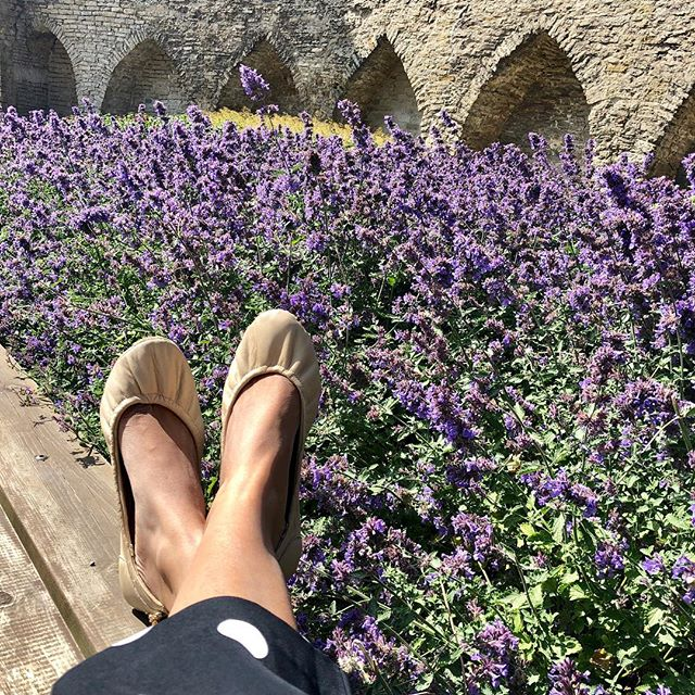 Summer lovin- Of lavender fields and wooden planks! #tandncollection #nycstyle #lastyle #citygirl #citystyle #citylife #balletflats #shoes #monogram #monogrammed  #bostonblog #fashionblogger #miamiblog #chicagostyle #chicagoblogger #texasfashion #lablogger  #panhellenic #christmas #balletflats #ballerina #miamiblogger #fblogger #silver #londonfashion #fashionista  #mommytobe #fashion #dance #fashionblog #travelblogger