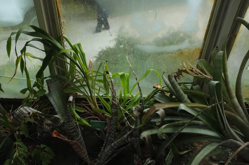 Buée, jardin botanique de l'Université de Strasbourg, serre tropicale, photographie numérique, 10x15, 2016