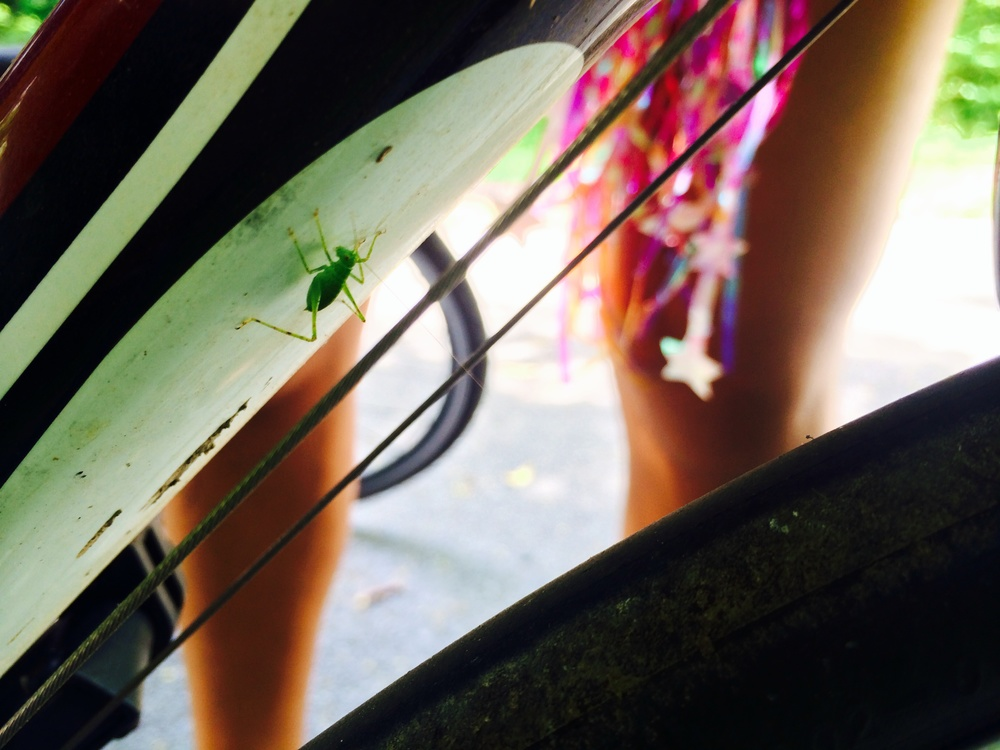 A grasshopper jumped onto my bike!
