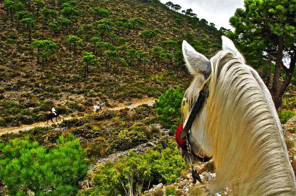 Perfect countryside for horse riding around Villa Amapola.