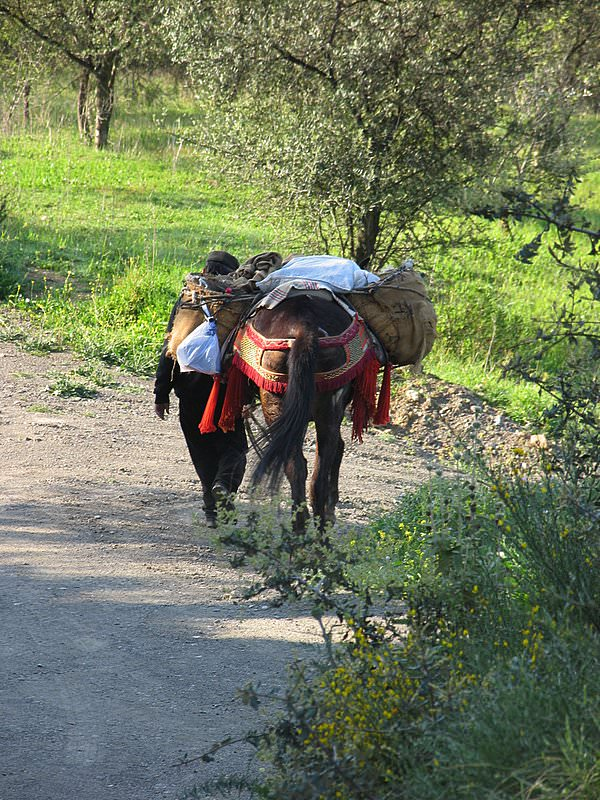 Get away from it all - fruit and vegetable deliveries at Villa Amapola in rural Andalucia!