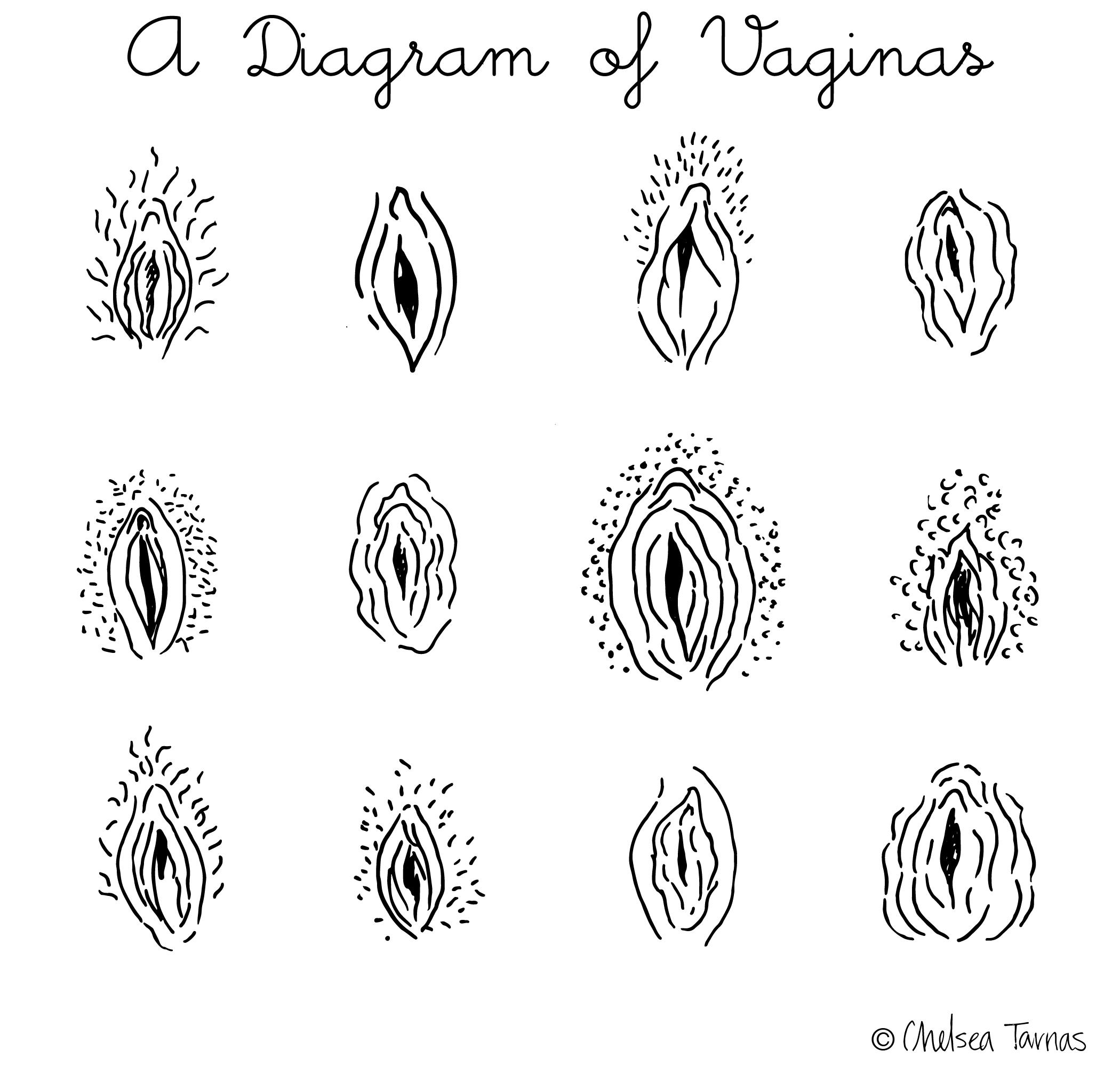 Daigram of vagina photos 798