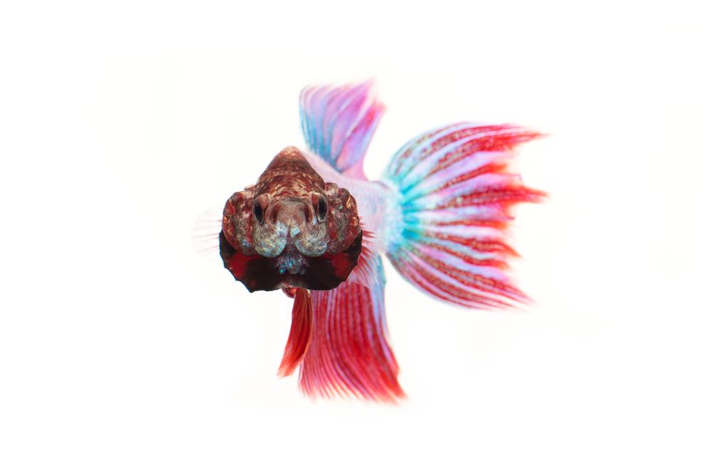 Mrs Sizzle Fish.jpg