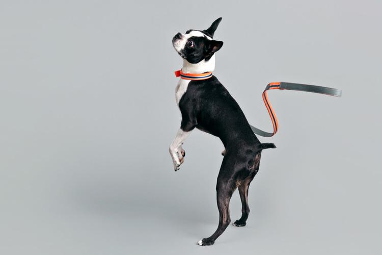 Mrs Sizzle Ware Dog.jpg