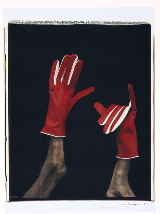 Mrs Sizzle Dog Gloves.jpg