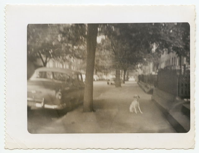 """My first dog was Cheddar. My father and sister got her from Bideawee. Not sure when the picture was taken, but that's a '53 Chevy. My second dog, Silky, came from Belmont Park, the racetrack. My uncle Joe was a trainer and he brought the puppy by and my mother couldn't say no. I've pretty much had a dog ever since. Red is our dog now. He came from somewhere down South, through ARF in East Hampton. Klaus fell in love with him at first sight. But I've loved all my dogs: George, Ben, Dave, Ralph, and now Red."""