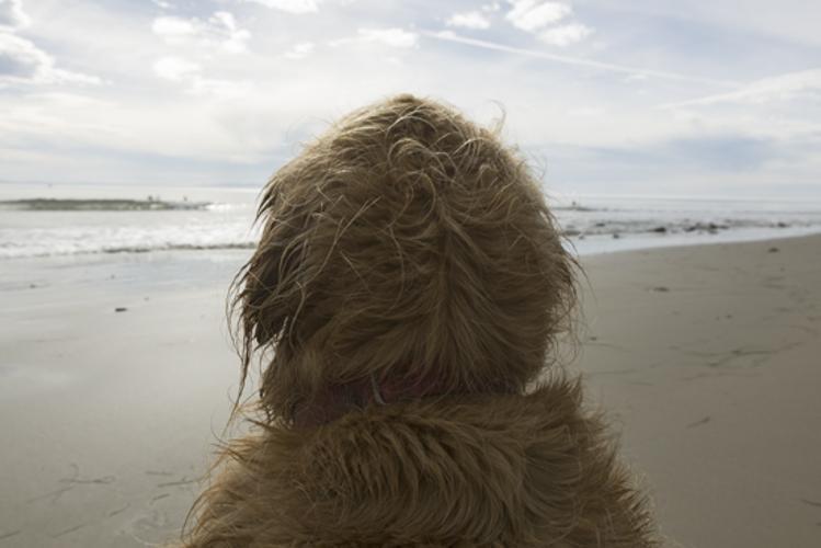 Mrs Sizzle Wet Dog.jpg