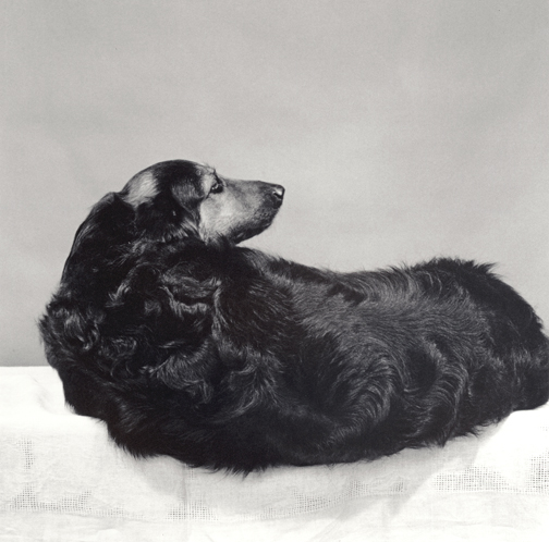 Muffin, 1981 ©   Robert Mapplethorpe Foundation  . Used by permission