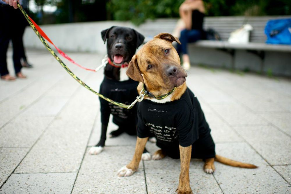 Lamar and Lex got adopted together on July 27th, 2014  Photos by   The Dogist   All clothes and leashes   John Bartlett
