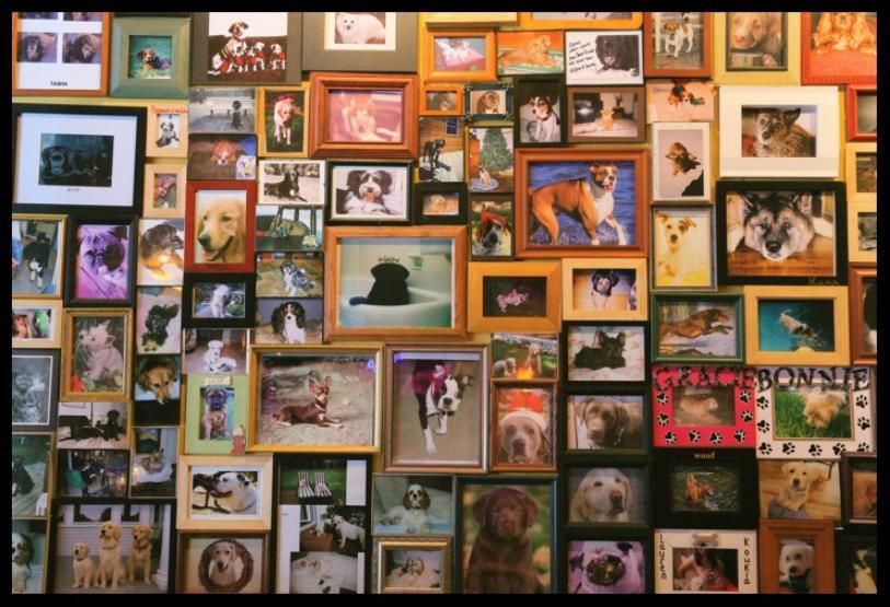 wall o' dogs