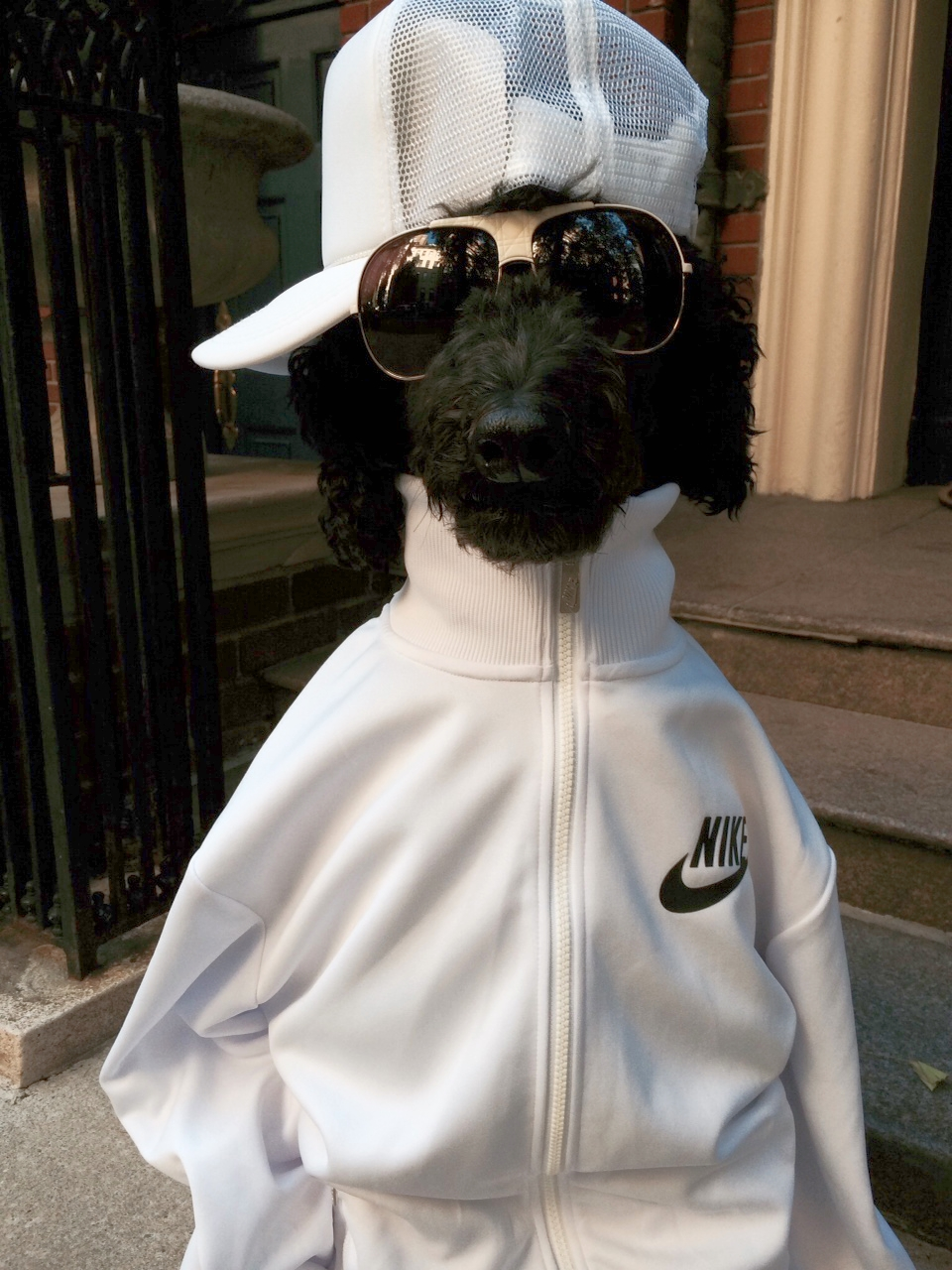 Nike Jacket, Otto baseball hat, Carrera sunglasses