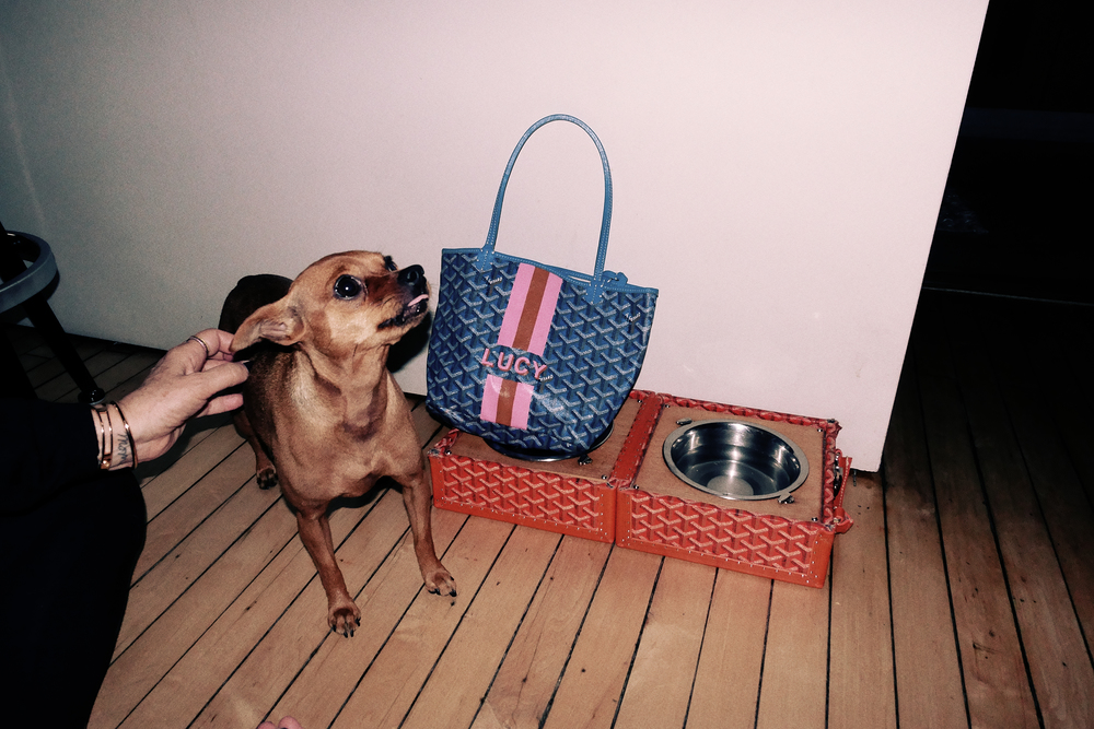 Goyard bag and dog bowl