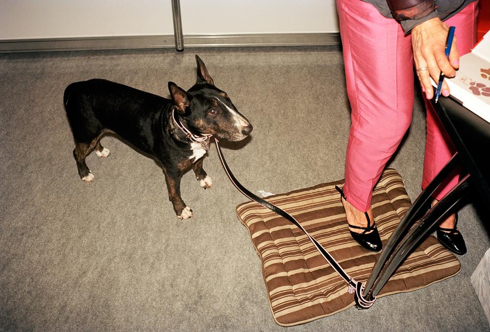Mrs Sizzle Sipke Visser Dogs.jpg