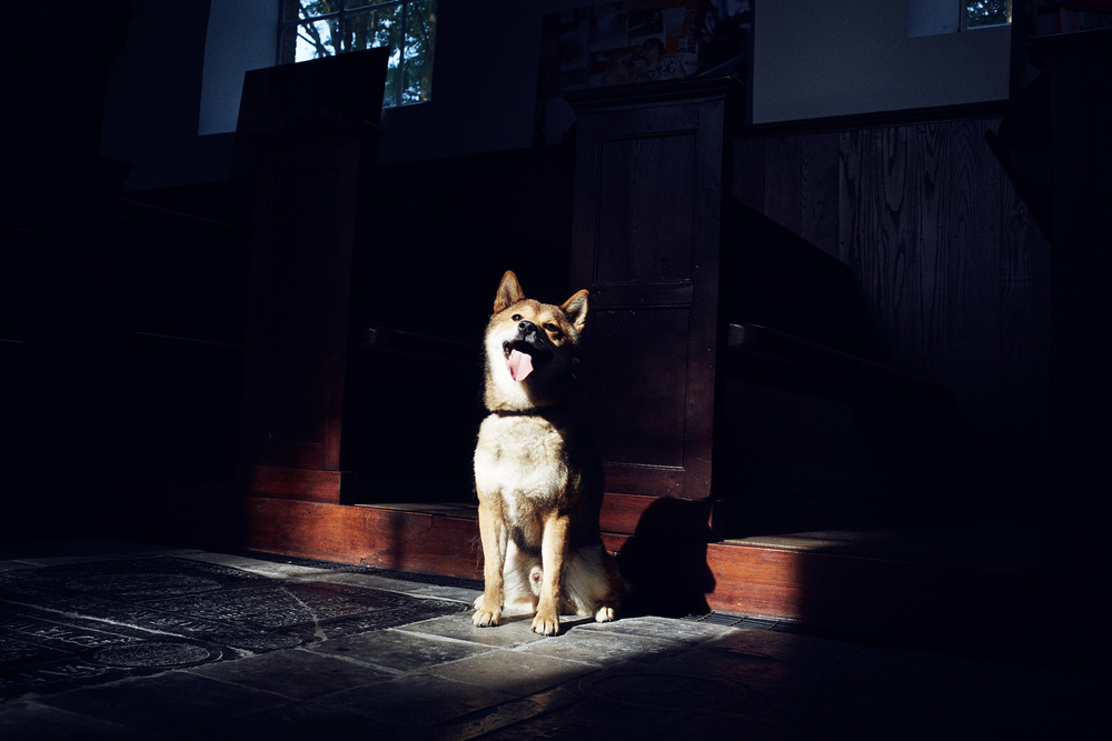 "From the exhibition, ""Church Doggies"", exhibiting in Zweins, Netherlands"