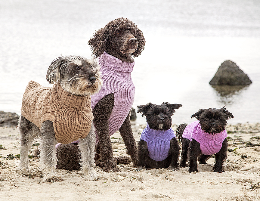 Beau, Gus, Edie, and Clair in Canine Styles