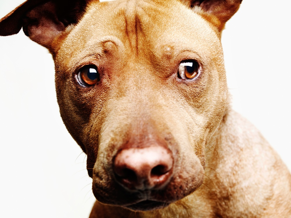 Redford all dogs available through- A Dog's Life Rescuein LA.