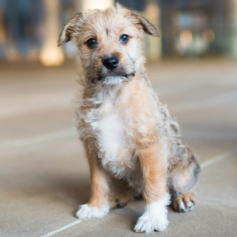 RESCUE OF THE WEEK