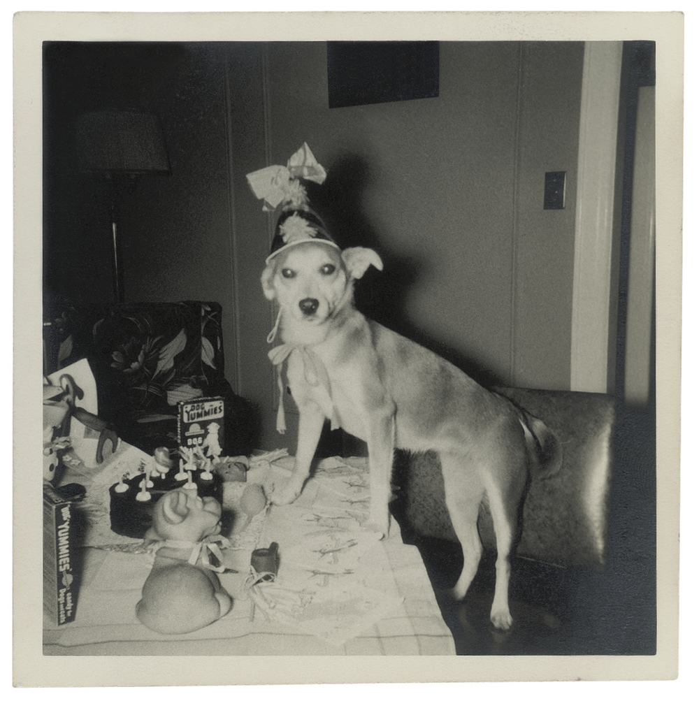 Copyright Catherine Johnson DOGS, Phaidon