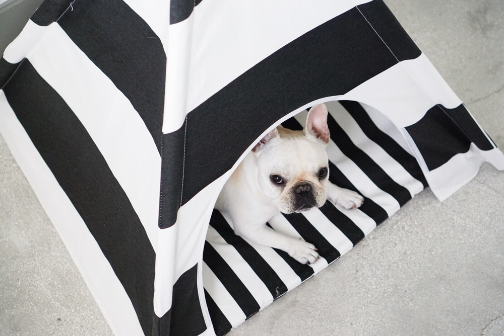 A new product by Piggy and Polly's owner that combines polkadots and dogs - chic teepee!
