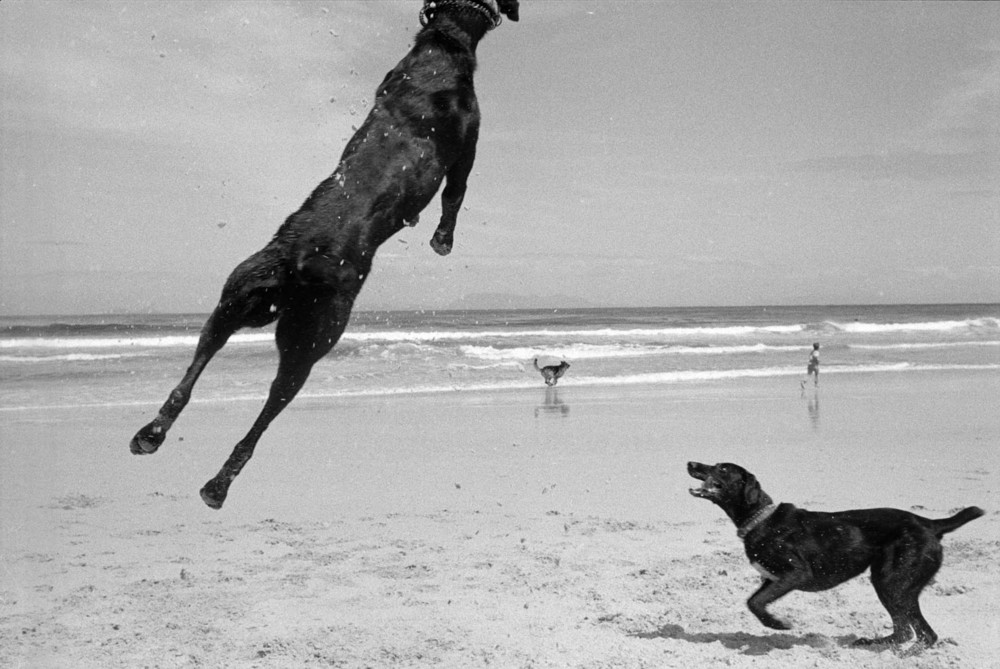 Two Dogs, Pringle Bay, Cape, South Africa. 1999/2000