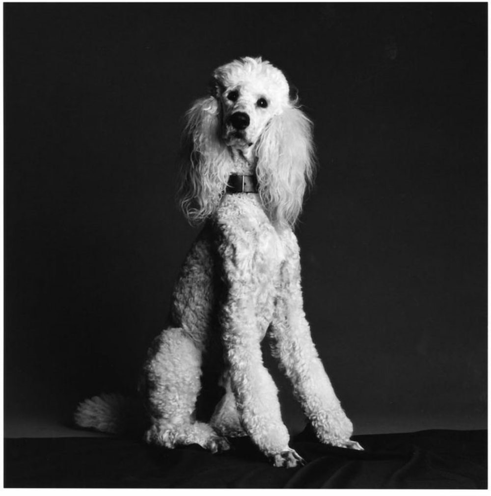 Artist Robert Greene's dog, Marsden