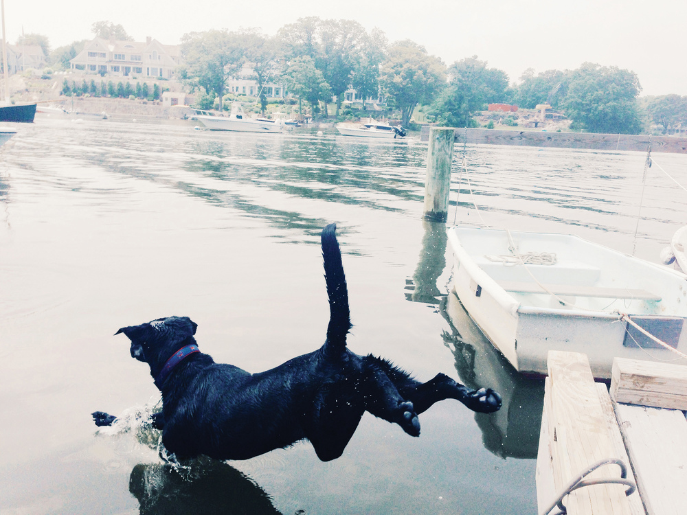 Harry, the lead taste tester for the book jumping off a dock in Rowayton, CT.