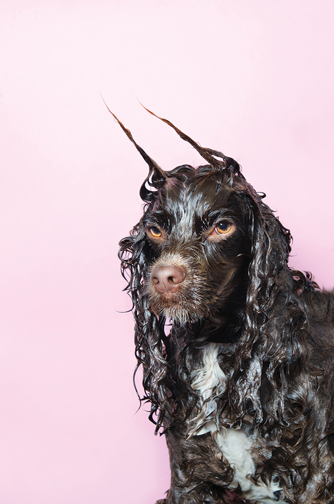©SophieGamand-WetDog-Harvey-web.jpg