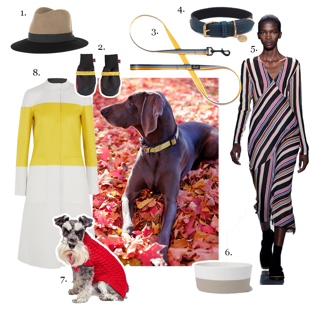 1. Rag and Bone,   Two Tone Wool Felt Fedora     2. PoochieBoots,   PoochieBoots with gold straps     3. Leeds Dog Supply,   The Jerry Leash     4. Mulberry,   Kingfish Dog Collar    5.  Suno Fall 2015    6. Waggo,   Dipper Ceramic Dog Bowl    7 . FabDog,   Red Chunky Turtleneck  ( Photo by Robert Stroetzel)   8. Narciso Rodrigues,   Reversable color-block wool coat  Holding image of Violet by Greg Delves.