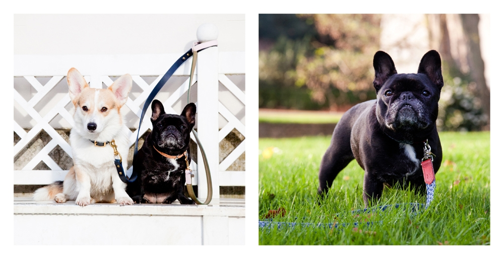 Left to right: Winny in Fetch and Follow and Elle in Mungo and Maude. Right Elle in Hiro and Wolf.