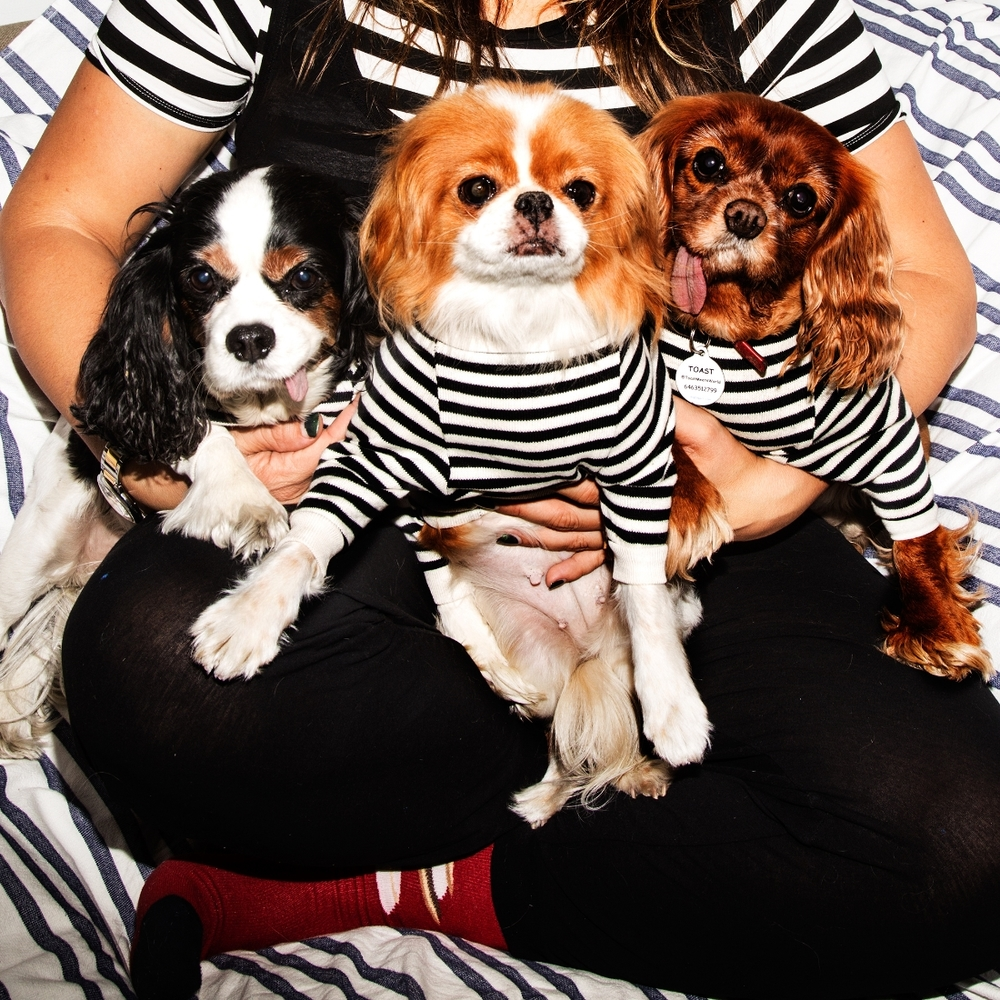 Stripes and more stripes! Shirts: The Cheeky Striped Pullover from DOG & CO.. All sweaters on dogs and toys also DOG & CO..