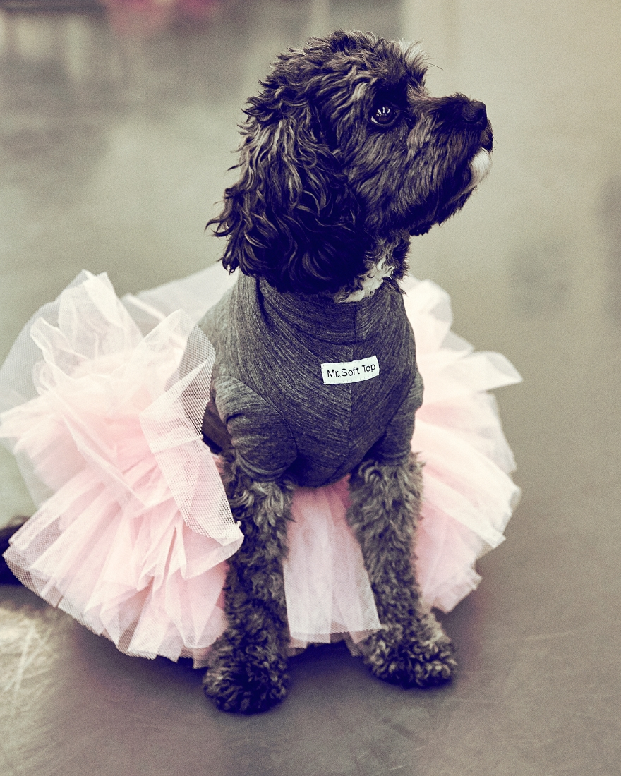 Riley in a tutu and Mr. Soft Top