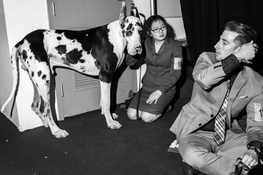Clarisse Guernia-Williams kneels with Vali, a Great Dane, while chatting with Matthew Bozicevich at Pier 94 during the 140th Westminster Kennel Club dog show in New York City.