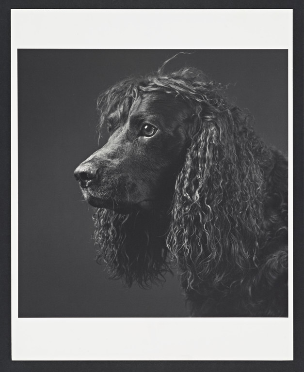Pony, Steven Aronson's dog, 1988.