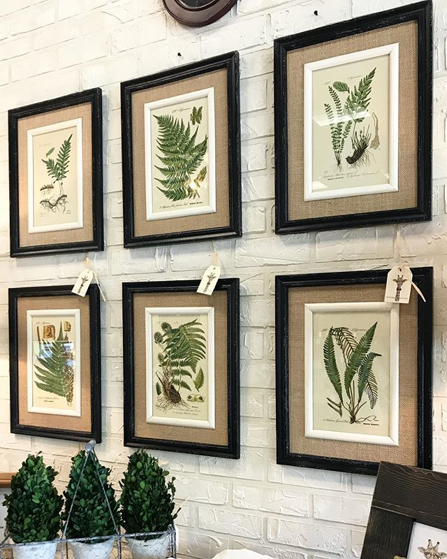 Our new fern prints are the perfect accent for almost any home! Come pick yours out today! 🌿