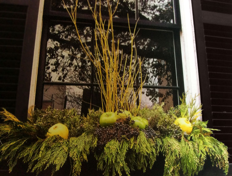Holiday window box display with pears & greens
