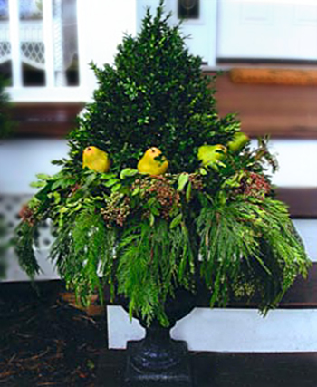 Holiday boxwood & pears