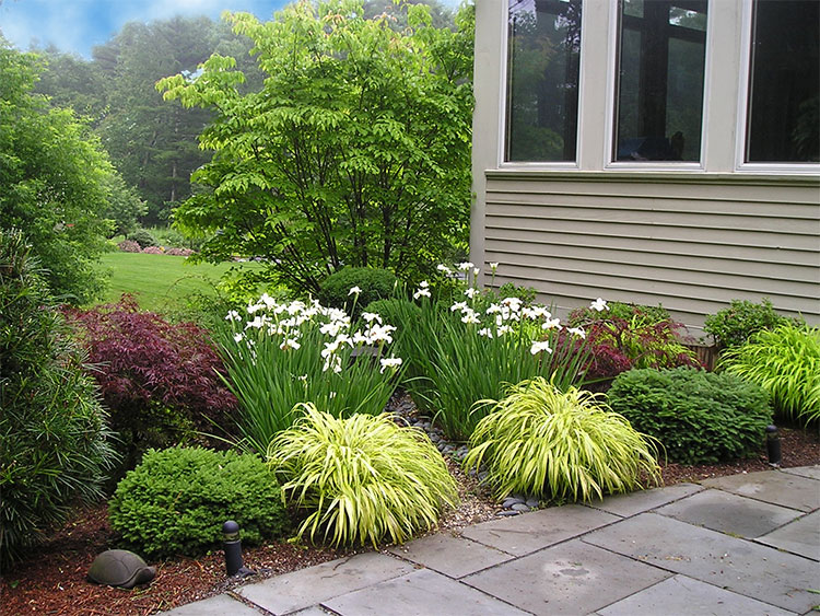 Grasses & low shrubs for an entryway