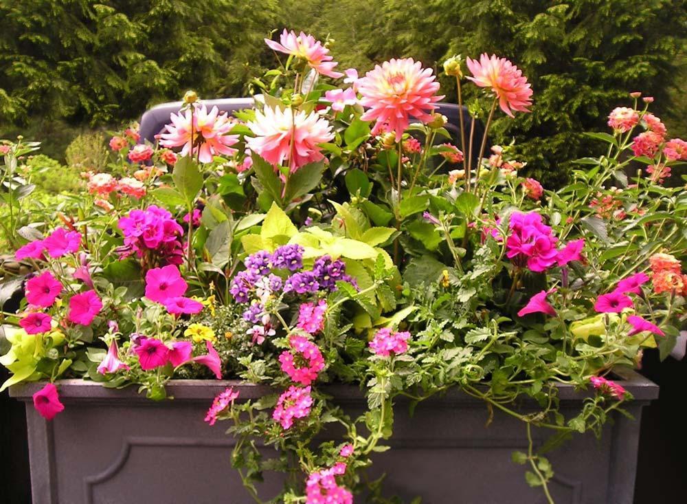 Containers garden designs by kristen for Garden design by kristen