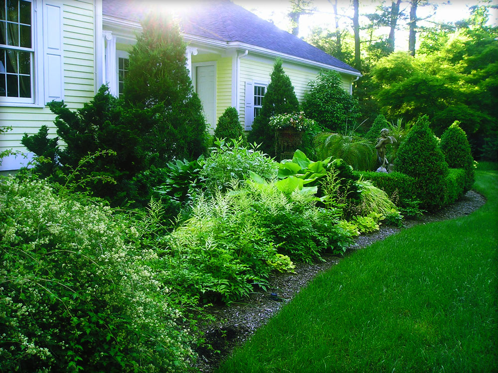 Border gardens with evergreen & perennials