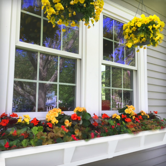 Begonias for a shady window box